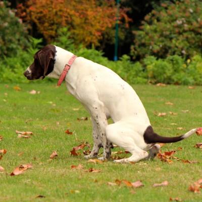 Asesoría en hábitos higiénicos y conducta para cachorros