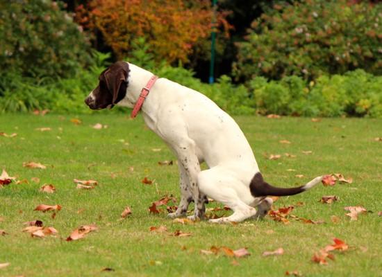 Asesoría en hábitos higiénicos y manejo de cachorros