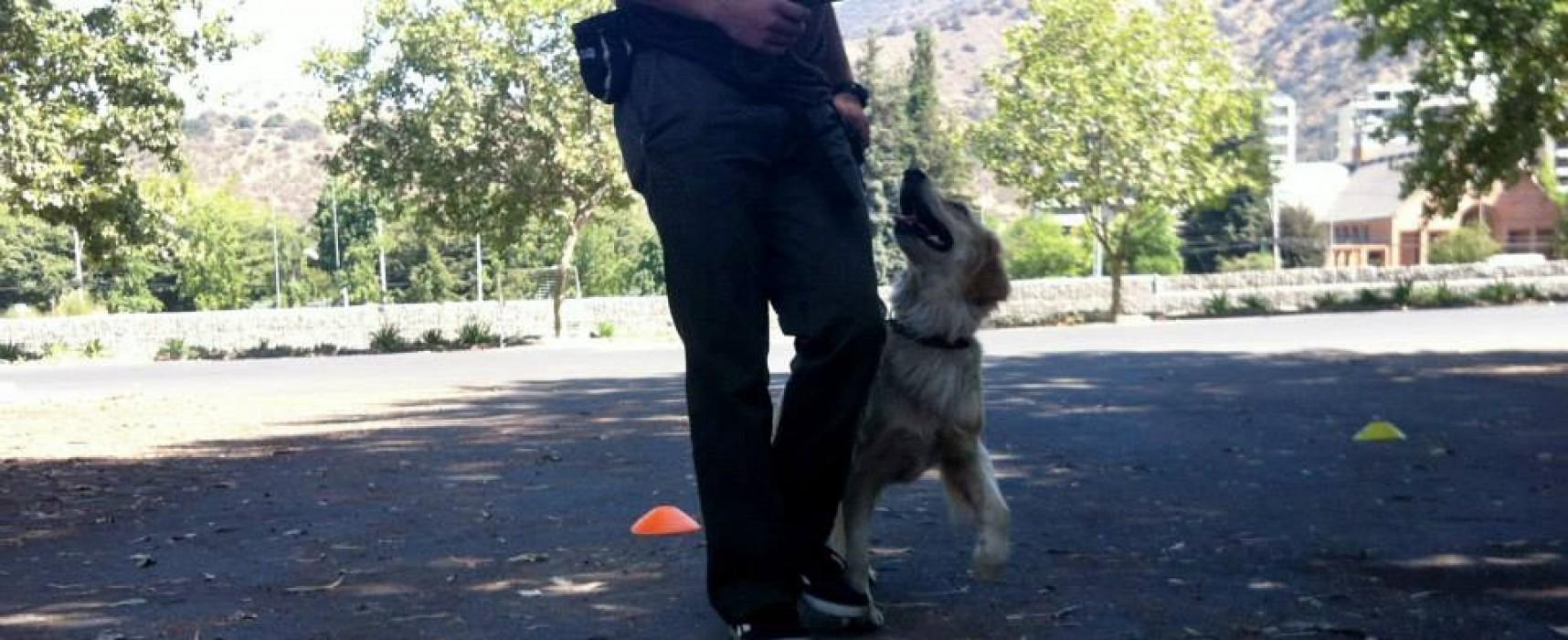 ¿Cómo puedo enseñarle a mi cachorro a hacer sus necesidades en un solo lugar?