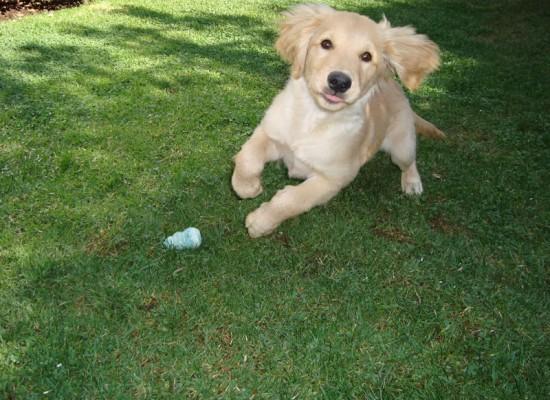 Perros con energía