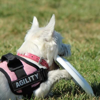 Perros difíciles de adiestrar