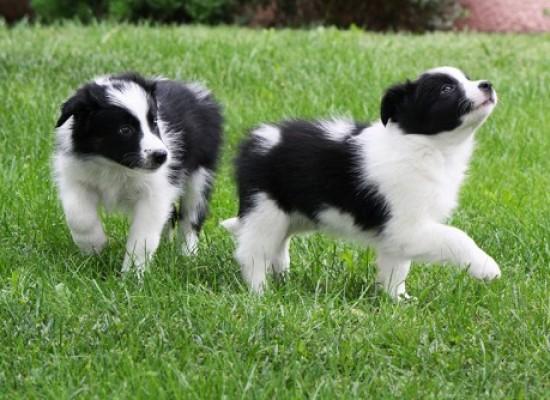 El bienestar del cachorro: cómo socializar al cachorro sin poner en riesgo su Salud