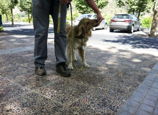 ¿Si socializo demasiado a mi perro y se vuelve amistoso con la gente, me servirá como guardián?
