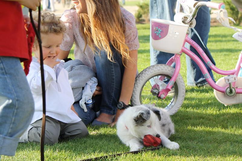 perro y ninos