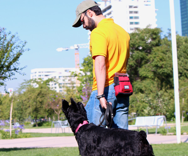 Programa de entrenamiento integral para perros de compañía