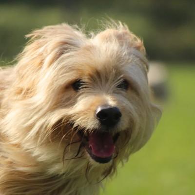 Aprenda a adiestrar a su perro en 6 sesiones a domicilio