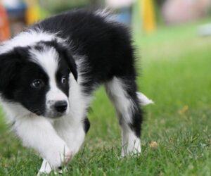 Curso para cachorros educación básica y prevención de comportamientos inadecuados