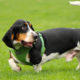 10 tips para enfrentar problemas de conducta en perros