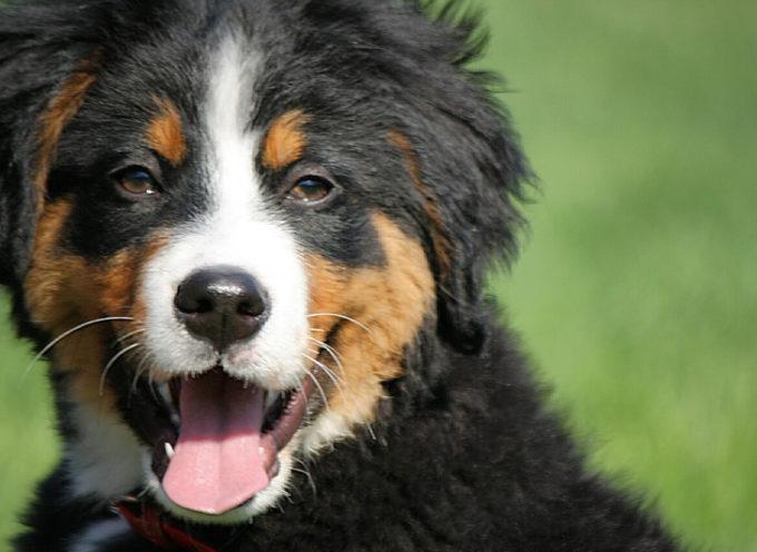 Adiestramiento del cachorro