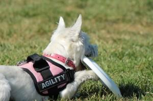 Perros dificiles de adiestrar