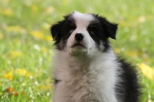 cuenta regresiva para tener un exelente perro de compania