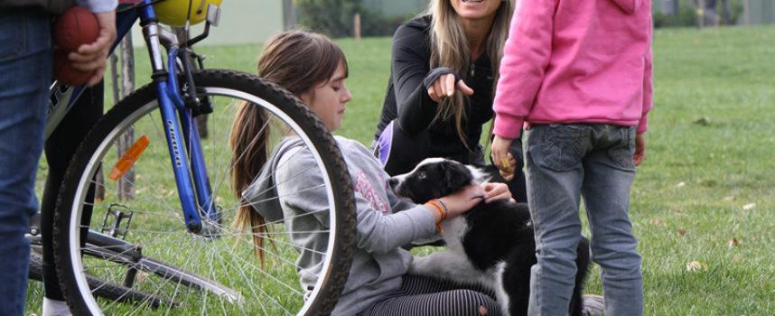Socialización y adiestramiento del cachorro