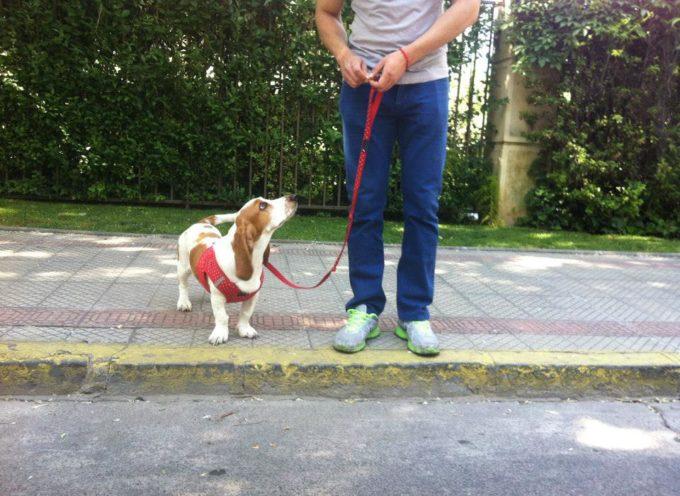 ¿El adiestramiento, sólo sirve para perros que tienen problemas de conducta?