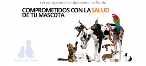 Clinica veterinaria Padre Hurtado