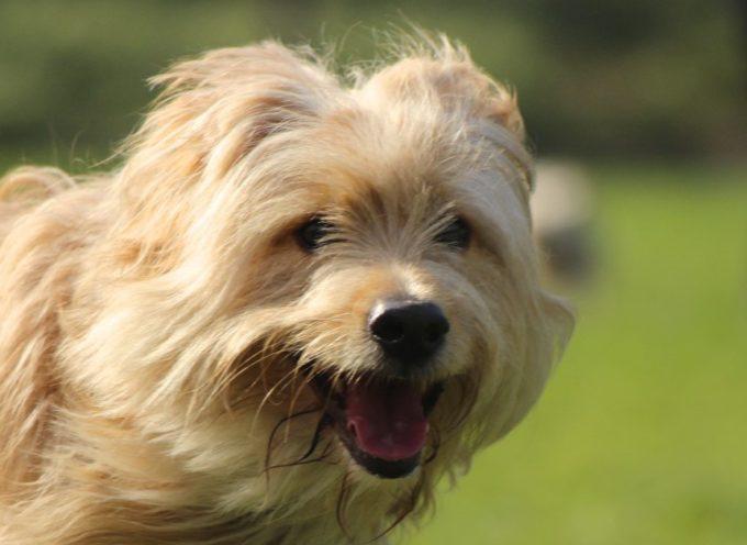 Aprende a Adiestrar y Manejar a tu perro en 6 sesiones a domicilio