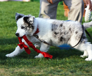 Servicio de Diagnóstico y Tratamiento de perros con problemas  de conducta