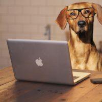 Integrate a nuestro equipo, Curso Entrenador Canino Profesional