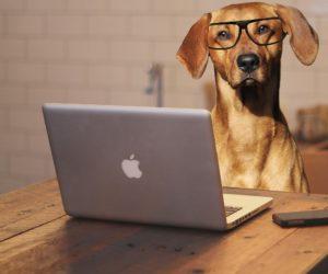 Adiestramiento Canino, Curso Online, Entrena a tu perro por videollamada vía WhatsApp, Skype o Zoom