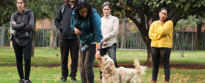 Primer Curso Adiestrador Canino Pro
